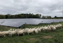 Opinion: Active Farming, Solar Energy Can Coexist | Farm Energy Usage & Solutions